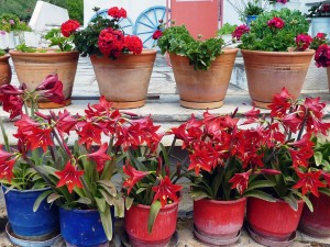 villa-oasis-garden-17