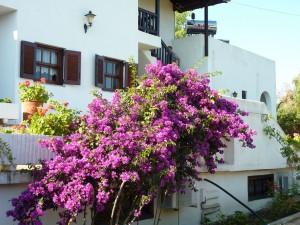 villa-oasis-garden-24