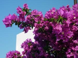 villa-oasis-garden-6